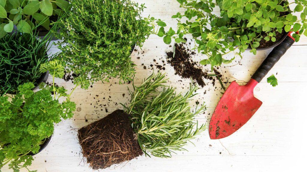 Multaa, viherkasveja ja lapio
